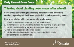 Cover-crops_early_postcard_EN_web_Front